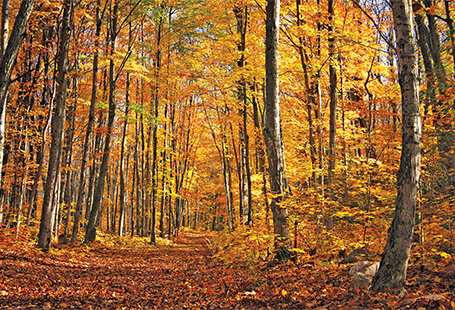 forest at the height of autumn