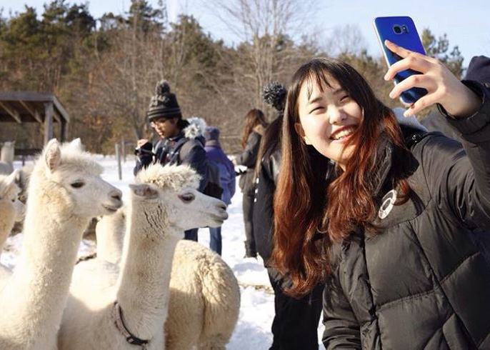 student taking picture with alpacas