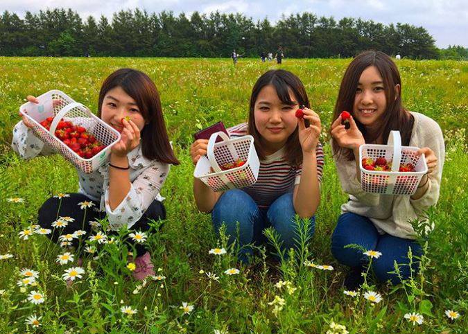 students picking strawberries
