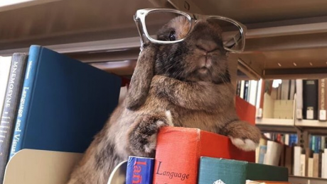 Tiggy rabbit library